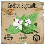 Kachur-500x717